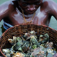 La pêcheuse d'huîtres, Ganvié 2013