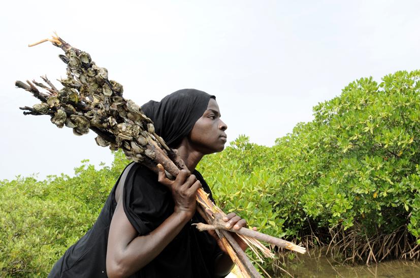 Pêche d'huitres 3, delta du Saloum, Sénégal 2015