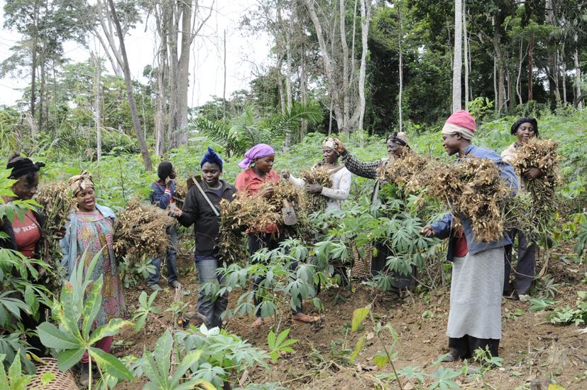 Le temps des récoltes, Cameroun 2012