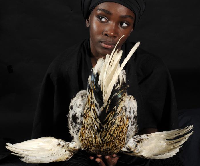 Bird 37, 2010