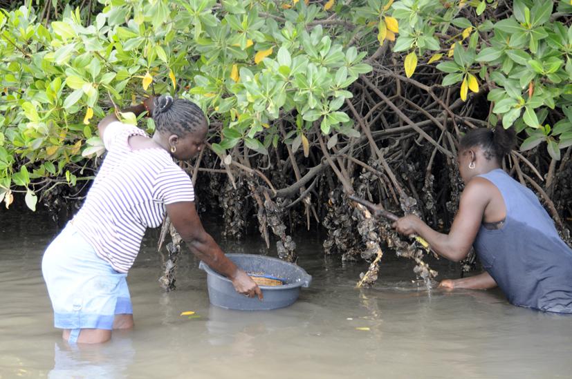 Pêche d'huitre 1, delta du Saloum, Sénégal 2015