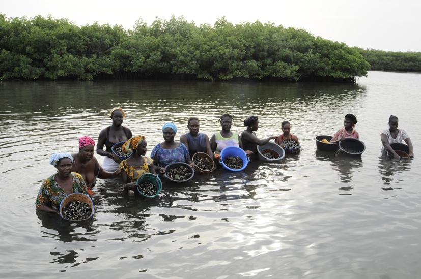 Pêcheuses d'huitre, Palmarin, Sénégal 2015
