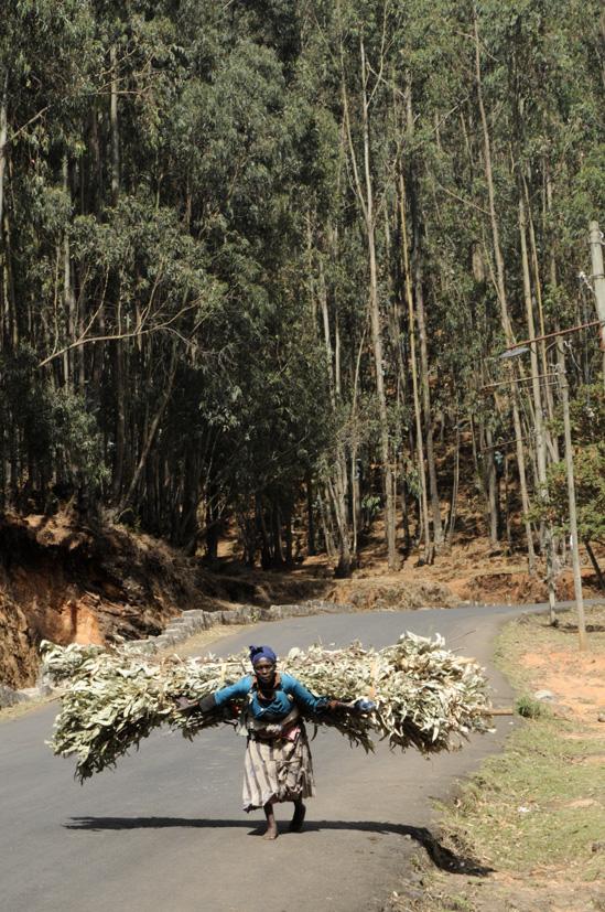 Quand le fardeau se confond à un envol, Entoto, Ethiopie 2014