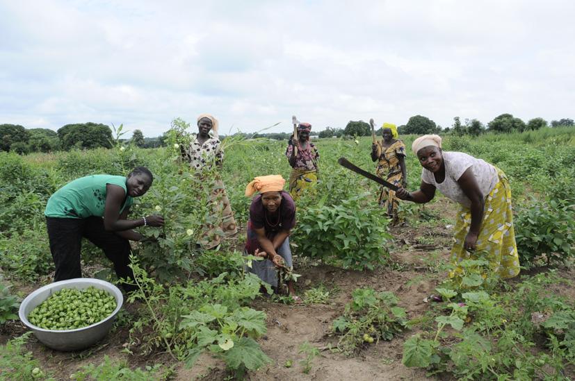 Le temps des récoltes 1, Bénin 2013