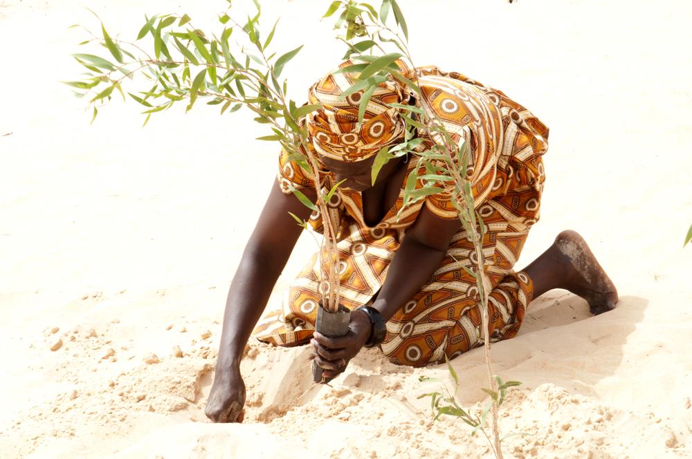 Planter des arbres pour faire renaitre le terroir 2, Niagua, Sénégal 2017