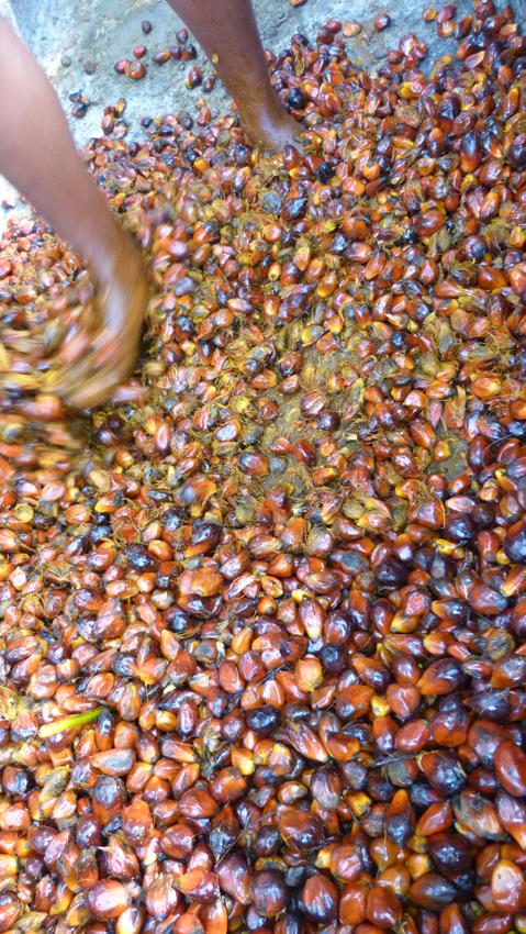 Foulage des noix de palme, Bafia Cameroun 2013