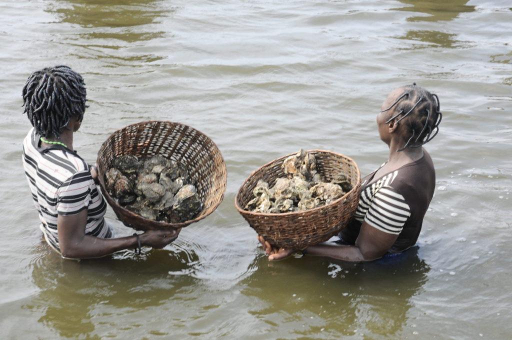 Pêche d'huîtres fructueuse, Ganvié 2013