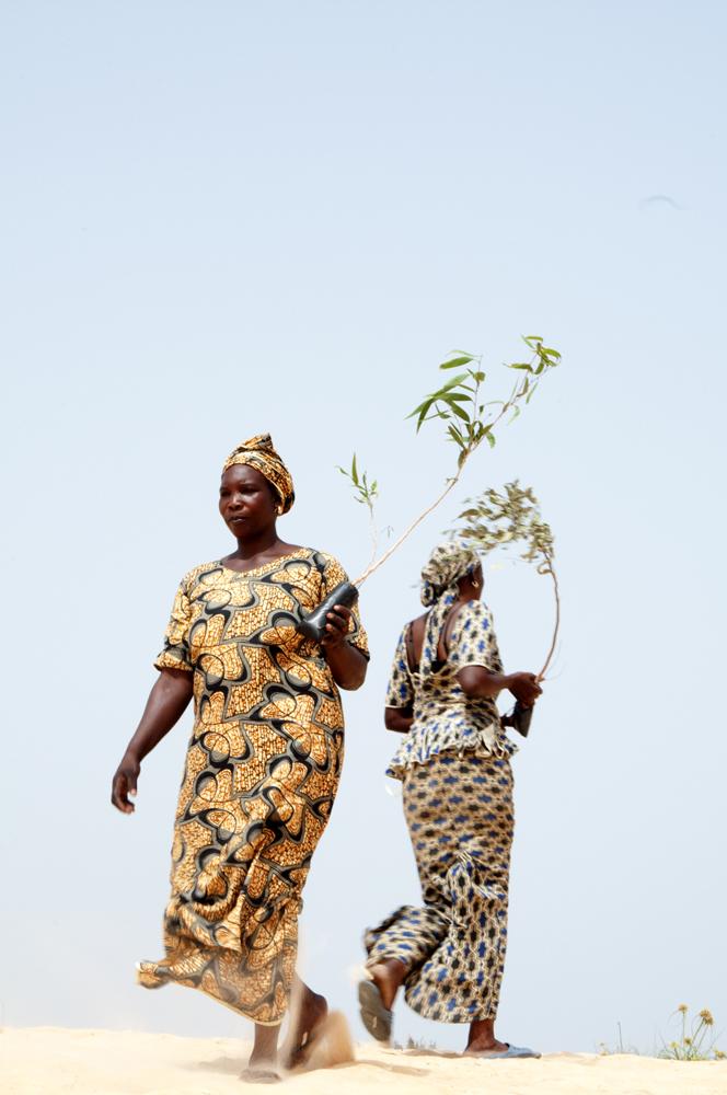 Planter des arbres pour faire renaitre le terroir 1, Niagua, Sénégal 2017